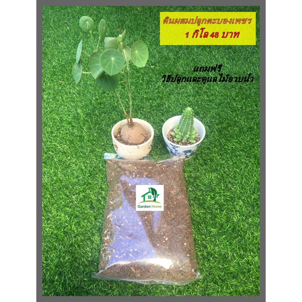 Garden Home ดินปลูกแคคตัส ดินปลูกบัวบกโขด ดินปลูกไม้อวบน้ำ ดินผสม