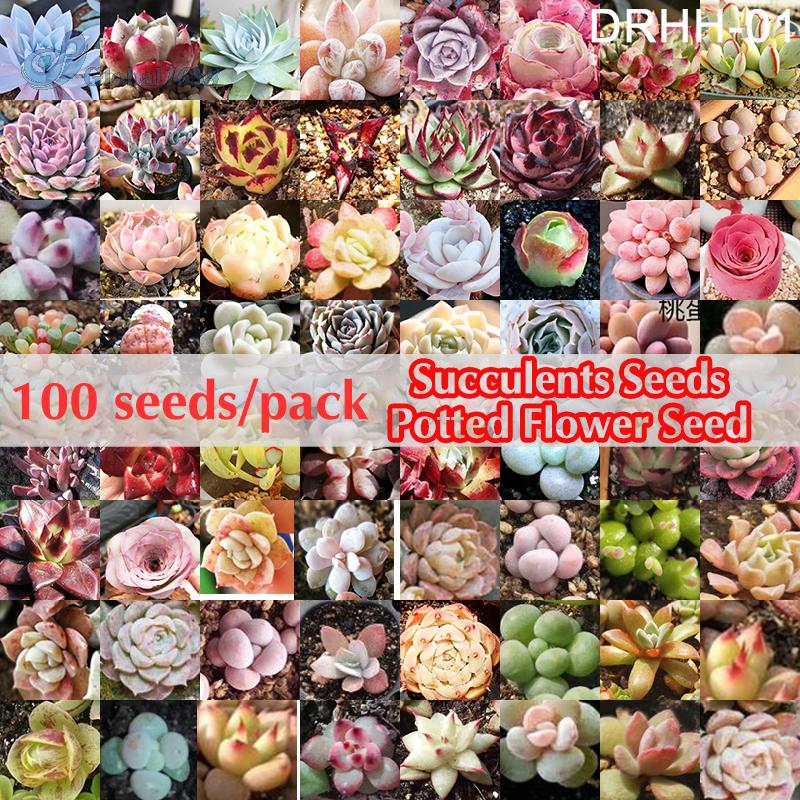 100 เมล็ด / แพ็คเมล็ดอวบน้ำผสมเมล็ดพันธุ์ไม้ดอกไม้ประดับหลายพันธุ์