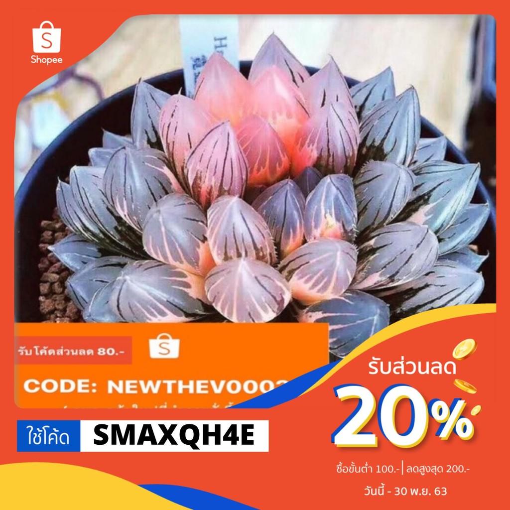 ใช้โค๊ดลด20%‼️ ไม้อวบน้ำ Haworthia cooperi (ด่าง) 50เมล็ด+ชุดเพาะ