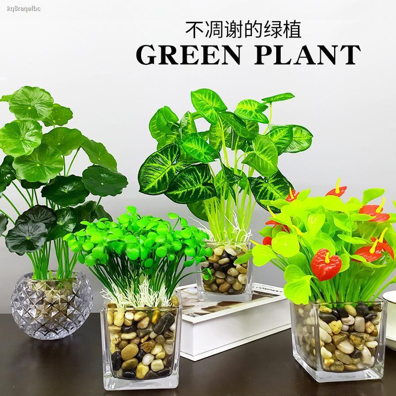 การจำลองพันธุ์ไม้อวบน้ำ♦จำลอง ต้นไม้สดปลอม พืชสีเขียว ตกแต่ง ห้องนั่งเล่น โต๊ะรับประทานอาหาร โต๊ะกาแฟ สำนักงาน กระถางต้น