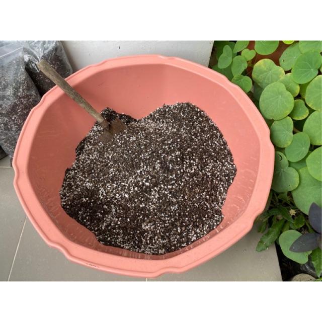 ดินปลูกกระบองเพชร,ไม้อวบน้ำ ดินปลูกแคคตัส