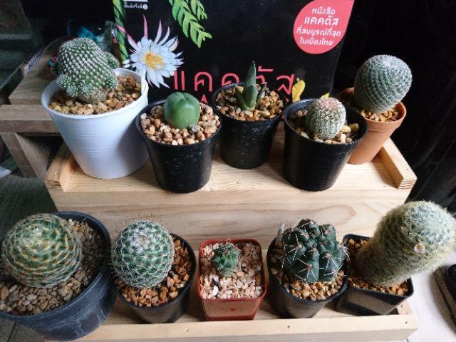 🌵 กระบองเพชร ไม้อวบน้ำ 🌵 cactus & succulents 🌵