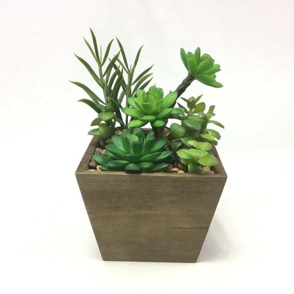 พืชฉ่ำน้ำประดิษฐ์,ไม้อวบน้ำ,พืชอวบน้ำ แคคตัสปลอมสวยเหมือนจริง สำหรับวางประดับตกแต่งบ้านเพื่อความสวยงาม