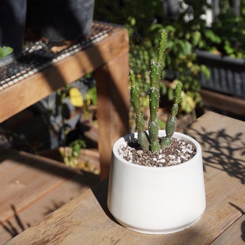 กระถางต้นไม้โมเดิร์น (3.6 นิ้ว) ปลูกกระบองเพชร ไม้อวบน้ำ ตกแต่งคาเฟ่ ไม้มงคลจิ๋ว