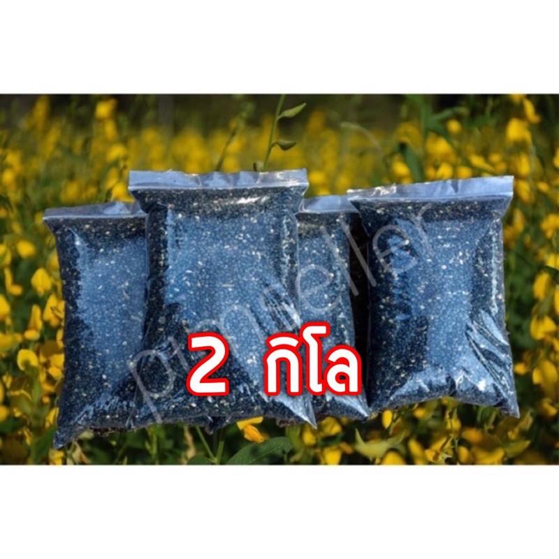☜❣▦ปอเทืองเมล็ดพันธุ์ ปุ๋ยพืชสด (ใหม่,แห้ง) 2 กก ราคา 70บาท จากแหล่งผลิต🌱ไร่สายทอง