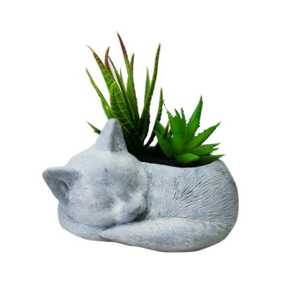 ไม้อวบน้ำในกระถางรูปแมว