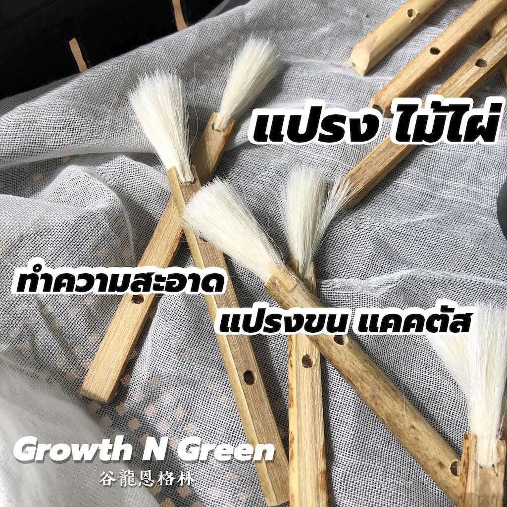 แปรงไม้ไผ่ ทำความสะอาด ปัดฝุ่น ปัดขน แคคตัส ไม้อวบน้ำ ไม่ทำลายผิวไม้ บางเบา อ่อนโยน ลดการสั่นสะเทือน