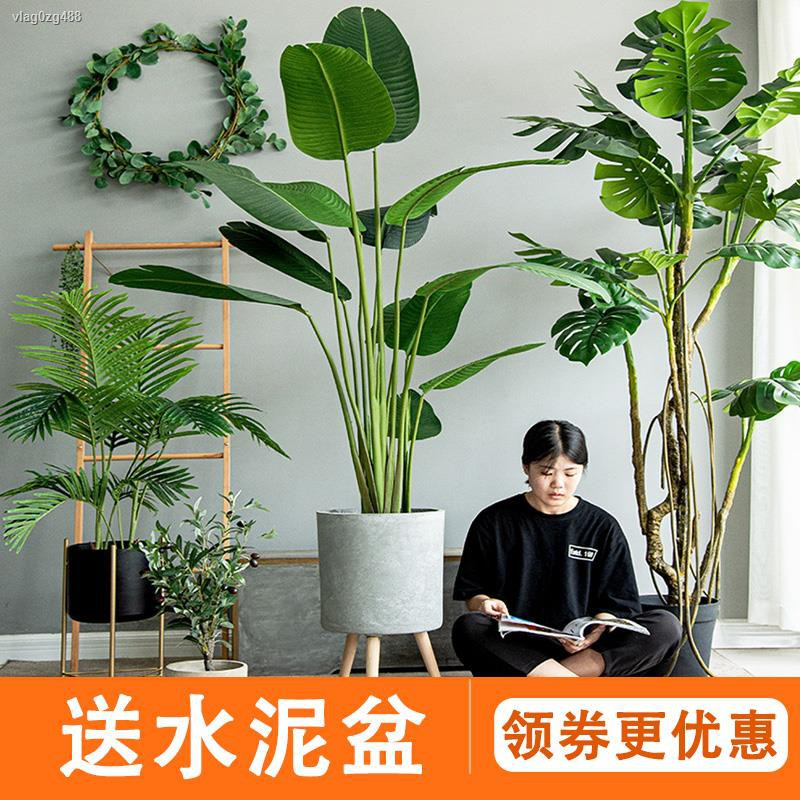 การจำลองพันธุ์ไม้อวบน้ำ♦❈Seven Mo จำลองพืชตกแต่งขนาดใหญ่นอร์ดิกปลอมพืชสีเขียวกระถางเครื่องประดับ Traveller กล้วย monster