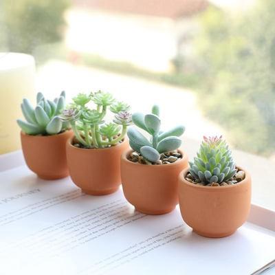 ไม้อวบน้ำจำลองดอกไม้ปลอมกระถางตกแต่งสร้างสรรค์พืชสีเขียวสำนักงานโต๊ะห้องรับแขกตู้ทีวีของตกแต่งบ้าน