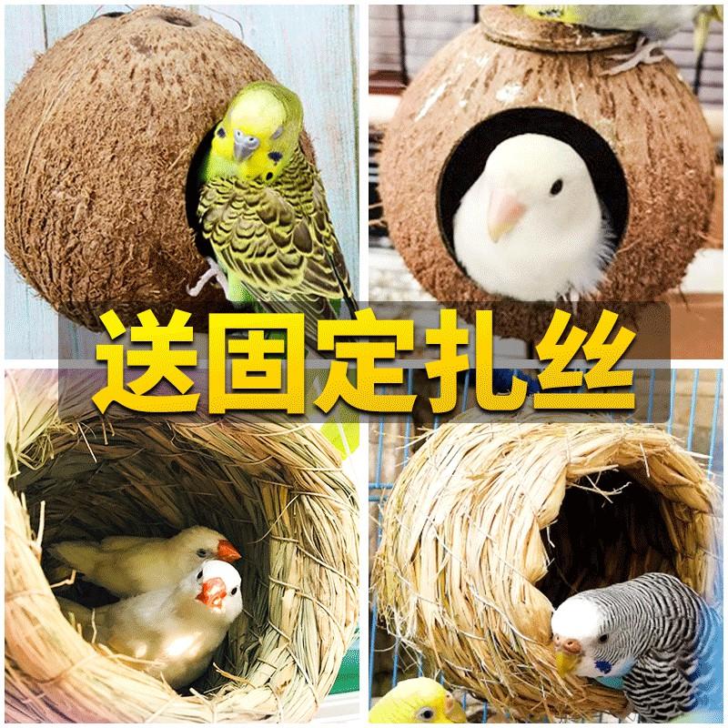 ✠◇ฟาง รังนก, ไข่มุก, นกฟีนิกซ์นกฟีนิกซ์ดำ, นกที่มีรังหญ้า, กะลามะพร้าว, รังนกกล่องเพาะพันธุ์กลางแจ้ง