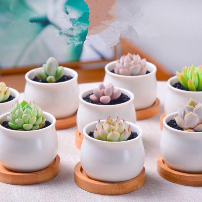 【 Manyuan Gardening 】ไม้อวบน้ำด้วยกระถางเซรามิกและการปูดิน