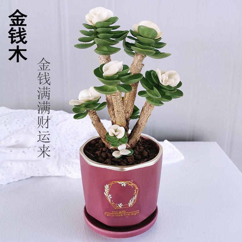 ❈▩เก่า กองไม้อวบน้ำ กระถางในร่ม ห้องนั่งเล่น สีเขียว พืช ดอกไม้ นอกจากฟอร์มาลดีไฮด์แล้ว จะนำไม้มงคลมาเลี้ยง