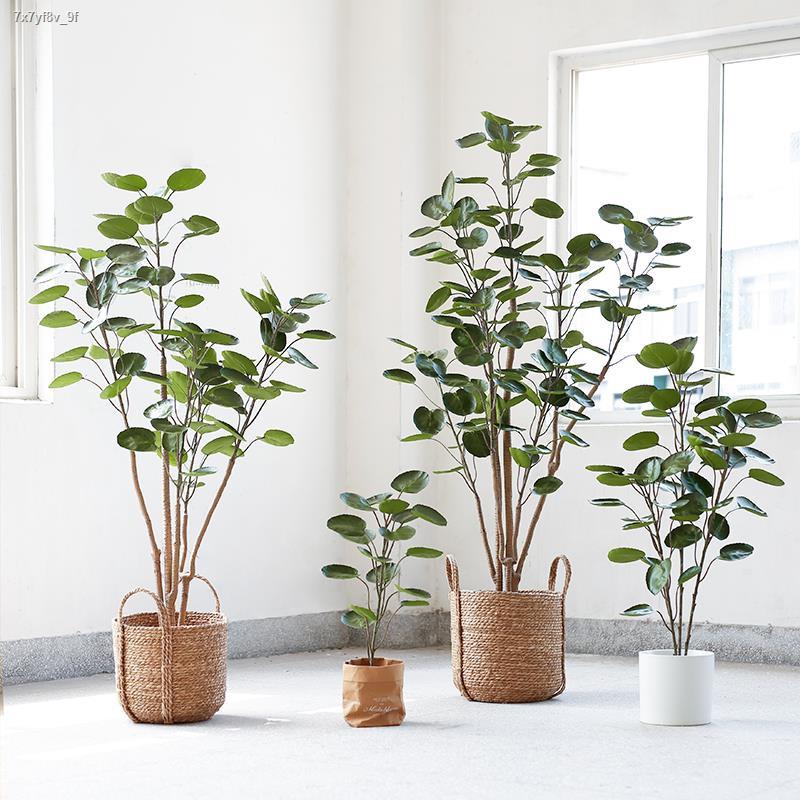 การจำลองพันธุ์ไม้อวบน้ำ▥ต้นไม้มงคล กระถาง ต้นไม้ปลอม ต้นไม้ใหญ่จำลอง พืชสีเขียว ตกแต่งห้องนั่งเล่น ในร่ม นำโชค ต้นไม้เงิ