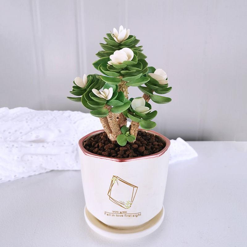 ❏เก่า กองไม้อวบน้ำ กระถางในร่ม ห้องนั่งเล่น สีเขียว พืช ดอกไม้ นอกจากฟอร์มาลดีไฮด์แล้ว จะนำไม้มงคลมาเลี้ยง