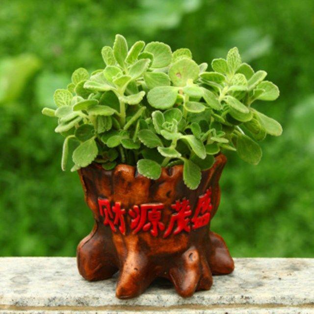 ¤✿ไม้จิ๋ว ไม้อวบน้ำ เมล็ดอวบน้ำ เมล็ดหอม กระถางในร่มขนาดเล็ก ดอกไม้กันยุง
