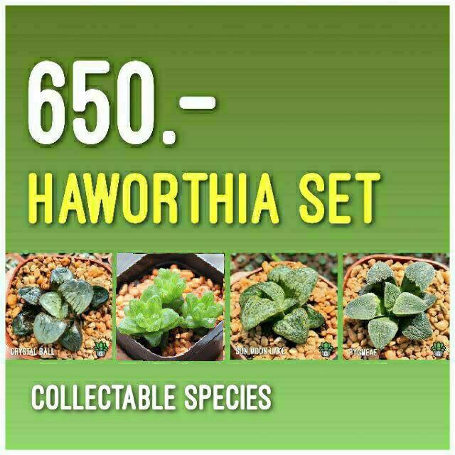 Haworthia Collectable Set Succulents 2U กุหลาบหินนำเข้า ไม้อวบน้ำ