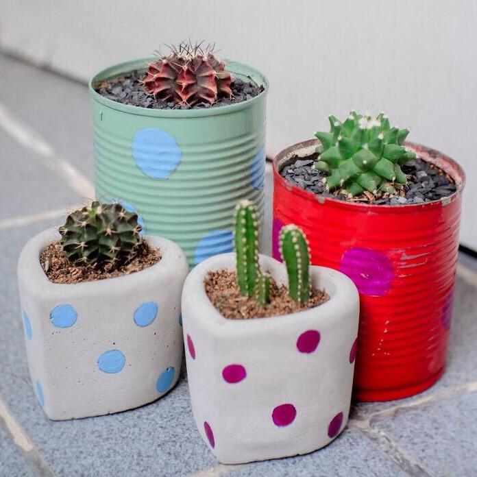 กระถางต้น cactus