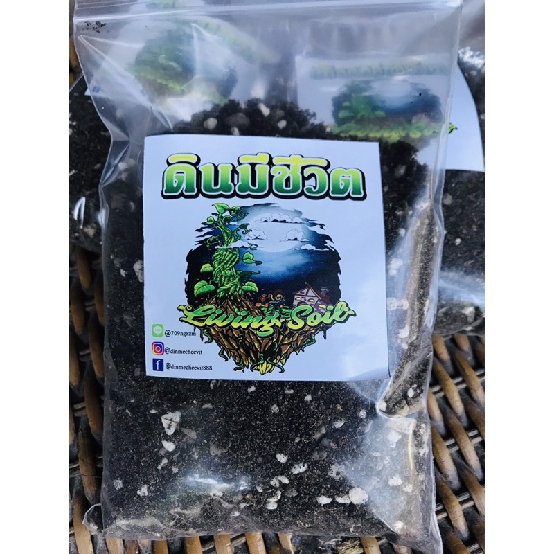 ดินปลูกไม้อวบน้ำและแคคตัส