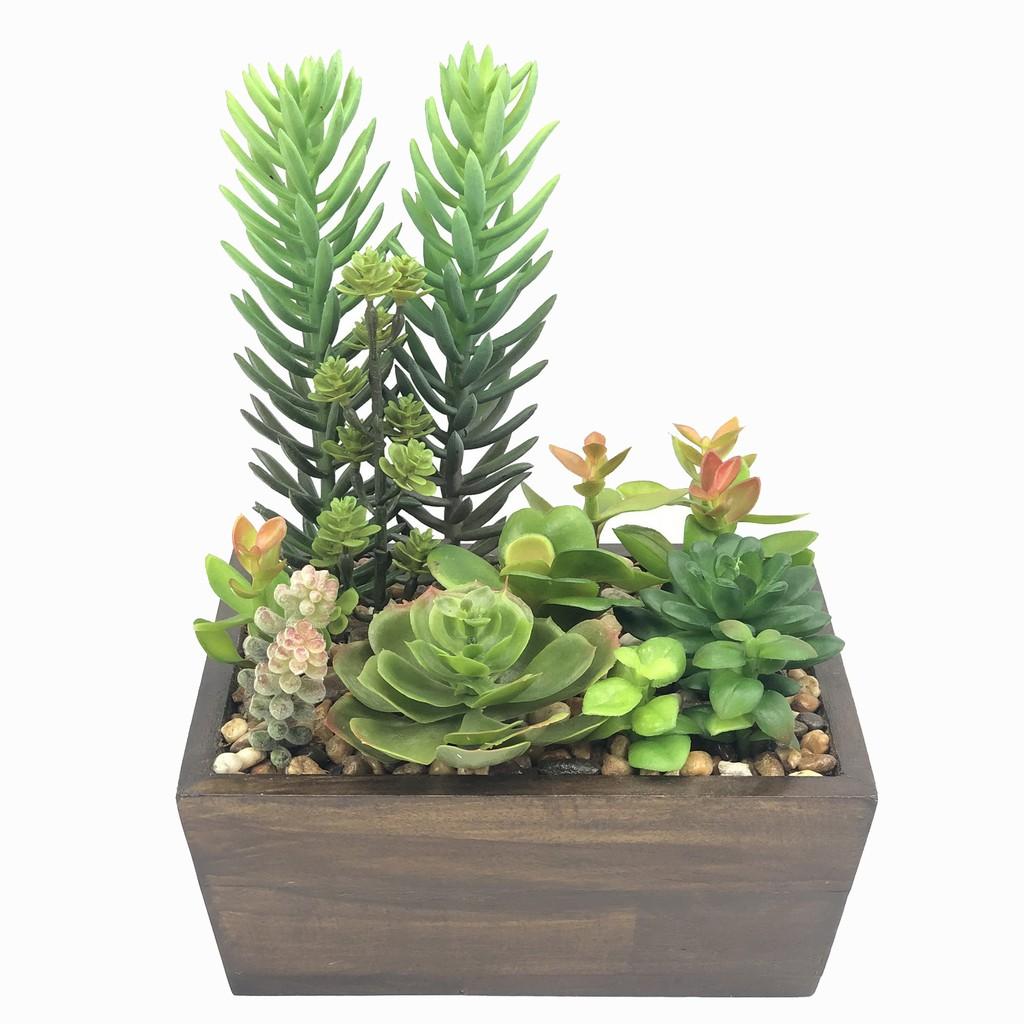 กระถางไม้อวบน้ำปลอม แคคตัสปลอม พืชฉ่ำน้ำประดิษฐ์ Succulent plant สวยเหมือนจริงสำหรับประดับตกแต่ง