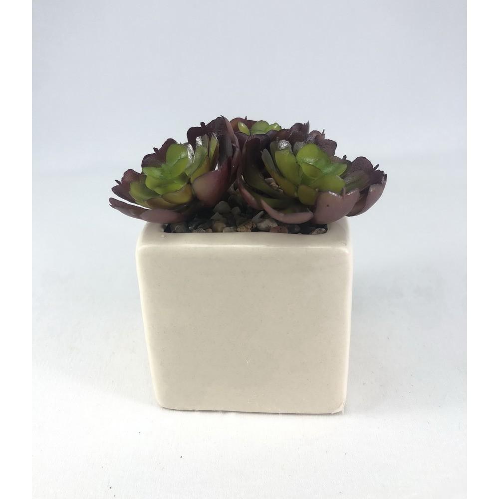 SET 3 หัว 90 บาท (ไม่รวมกระถาง) ไม้อวบน้ำปลอม ผักกาดซ้อน Succulent plant head จัดสวนจิ๋ว สวนถาด (no pot)