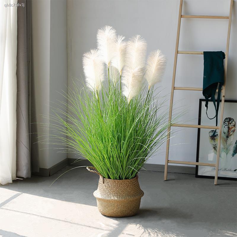 การจำลองพันธุ์ไม้อวบน้ำ∏✟กก หญ้าปลอมแห้งช่อดอกไม้จำลองดอกไม้สไตล์นอร์ดิกตกแต่งห้องนั่งเล่นปลอมพืชสีเขียว potted เครื่องป