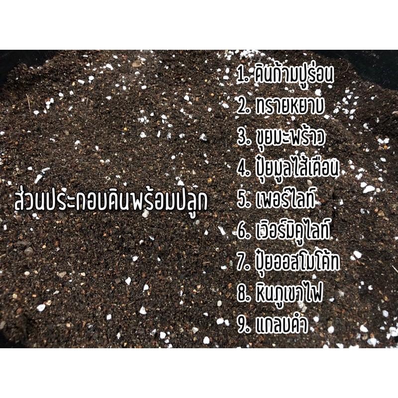 ดินปลูกกระบองเพชร 📣150g🌱400g🌱1000g ดินปลูกแคคตัส ไม้อวบน้ำ