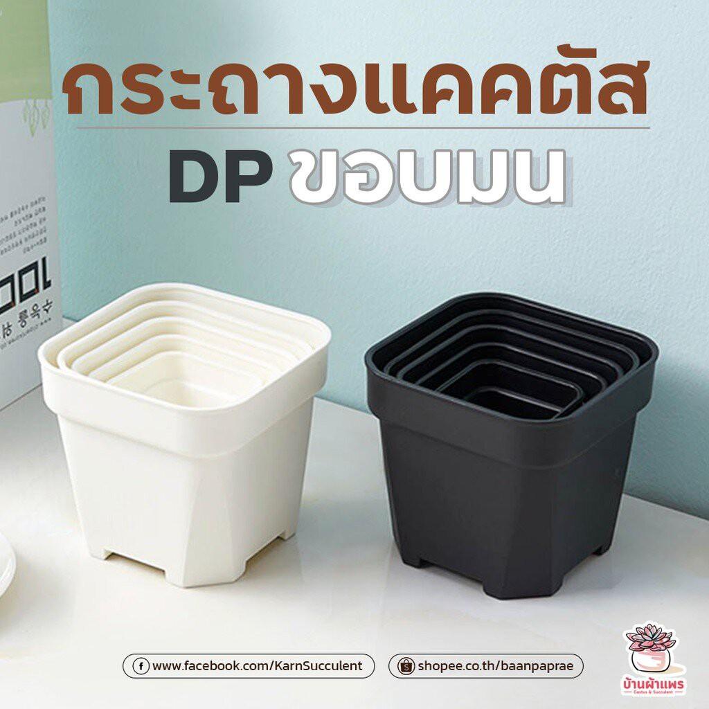 ✣กระถางแคคตัส DP ขอบมน กระถางไม้อวบน้ำ กระถางพลาสติก กระถางสี่เหลี่ยม❃