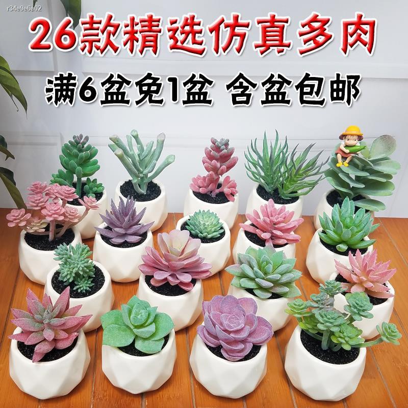การจำลองพันธุ์ไม้อวบน้ำ▣✁ins จำลองมินิ ฉ่ำ ไม้กระถาง ดอกไม้ปลอม ร้านขายเนื้อ สำนักงาน ต่อต้านความจริง พืชสีเขียว ตกแต่ง