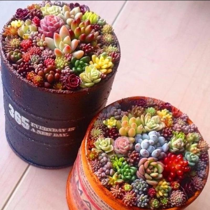 succulent plants 100ชิ้น / แพ็ค พืชอวบน้ำ ต้นไม้ประดับ เมล็ดพันธุ์ ไม้ประดับ plants ต้นไม้ตกแต่ง เมล็ด พันธุ์ไม้หายาก