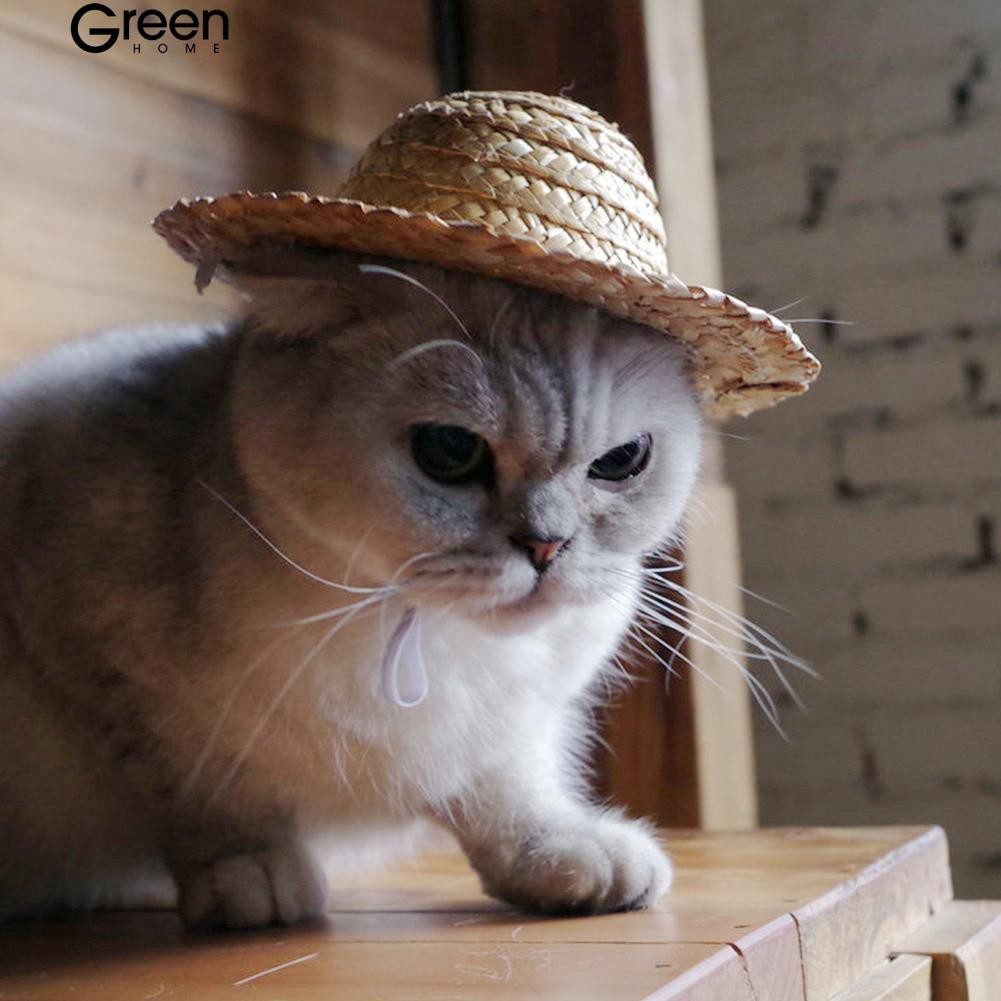 [COD] Greenhome หมวกกันน็อคฤดูใบไม้ร่วงตุ๊กตาแมวตัวเล็ก