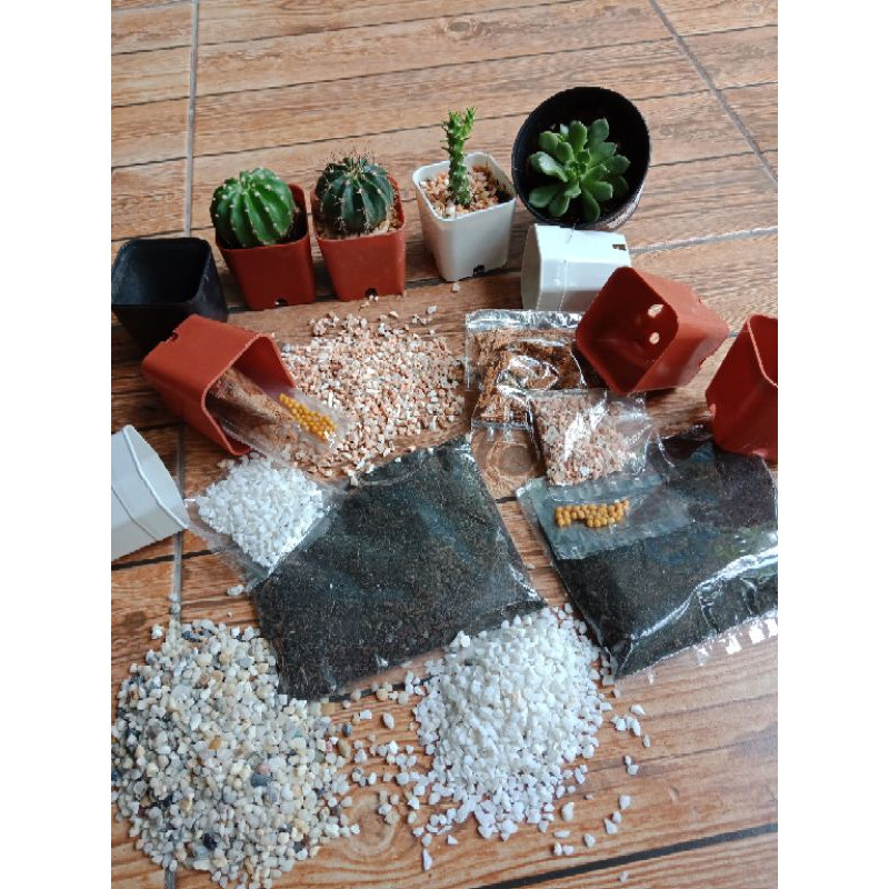 ดินแคคตัส ชุดดินปรุงสำเร็จพร้อมกระถาง 2 นิ้ว สำหรับปลูกแคตตัส กระบองเพชร ไม้อวบน้ำและไม้ขนาดเล็ก