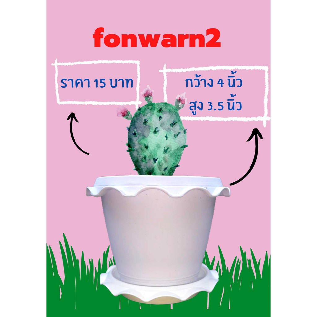 Fonwarn2 กระถางแคคตัส กระถางไม้อวบน้ำ กระถางพลาสติกสีขาวปากจีบ ขนาด 4 นิ้ว สูง 3.5 นิ้ว ซื้อวันนี้แถมหินสีเลือกได้มี 27