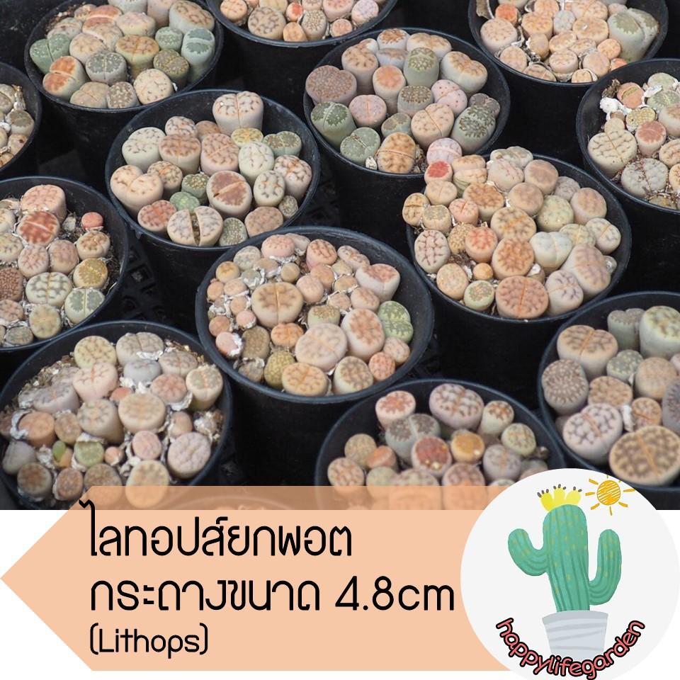 เมล็ดพืช ไลทอปยกพอต [‼️อ่านก่อนสั่ง] ไลทอปพอตจิ๋ว ไม้อวบน้ำ ราคาถูก