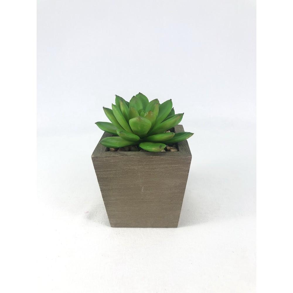 กุหลาบหิน Echeveria head (เฉพาะหัว ไม่รวมกระถาง) ไม้อวบน้ำปลอม Artificial decorative plant (3 piece set) (no pot)
