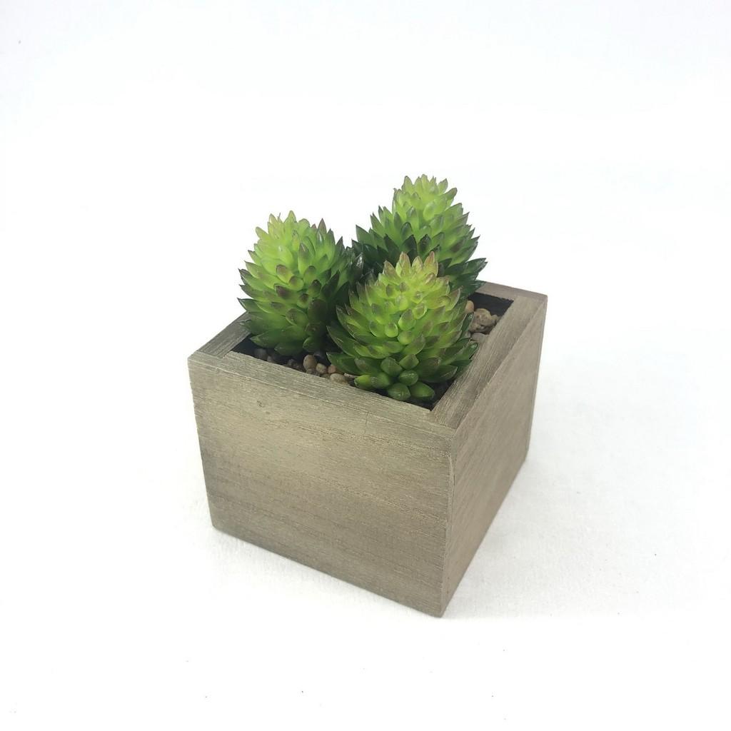 SET 3 หัว 70 บาท(ไม่รวมกระถาง) Succulent plant head ไม้อวบน้ำปลอม พืชปลอมจัดสวนจิ๋ว สวนถาด สวนในขวดแก้ว