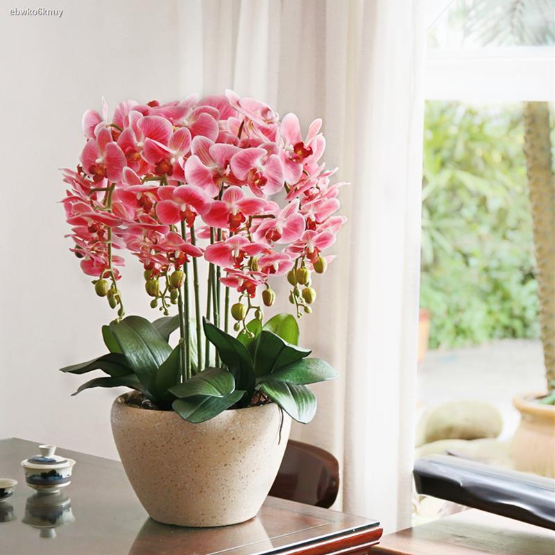 การจำลองพันธุ์ไม้อวบน้ำ۩ดอกไม้จำลองเหอเจีย ชุดดอกไม้ศิลปะดอกไม้แห้งดอกไม้ผ้าไหมดอกไม้ปลอมกระถางตกแต่งห้องนั่งเล่นเพื่อขจ
