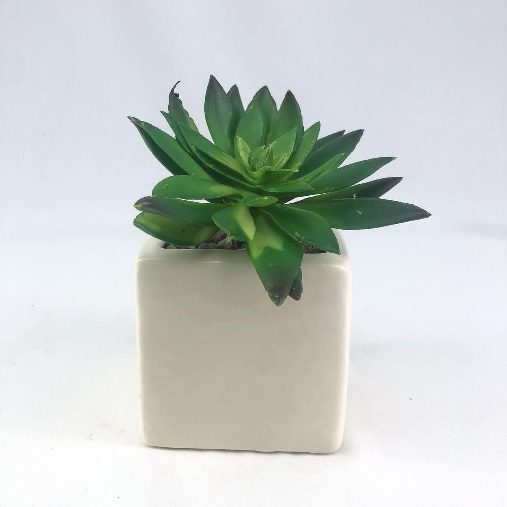 ไม้อวบน้ำ พืชอวบน้ำปลอม (เฉพาะหัว ไม่รวมกระถาง) Succulent plant head สำหรับประดับตกแต่งสวนถาด สวนจิ๋ว