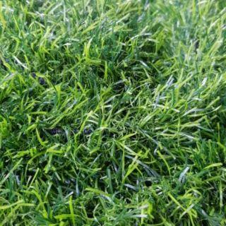 หญ้าเทียม1×10mเนื้อท็อบAหญ้า3cm