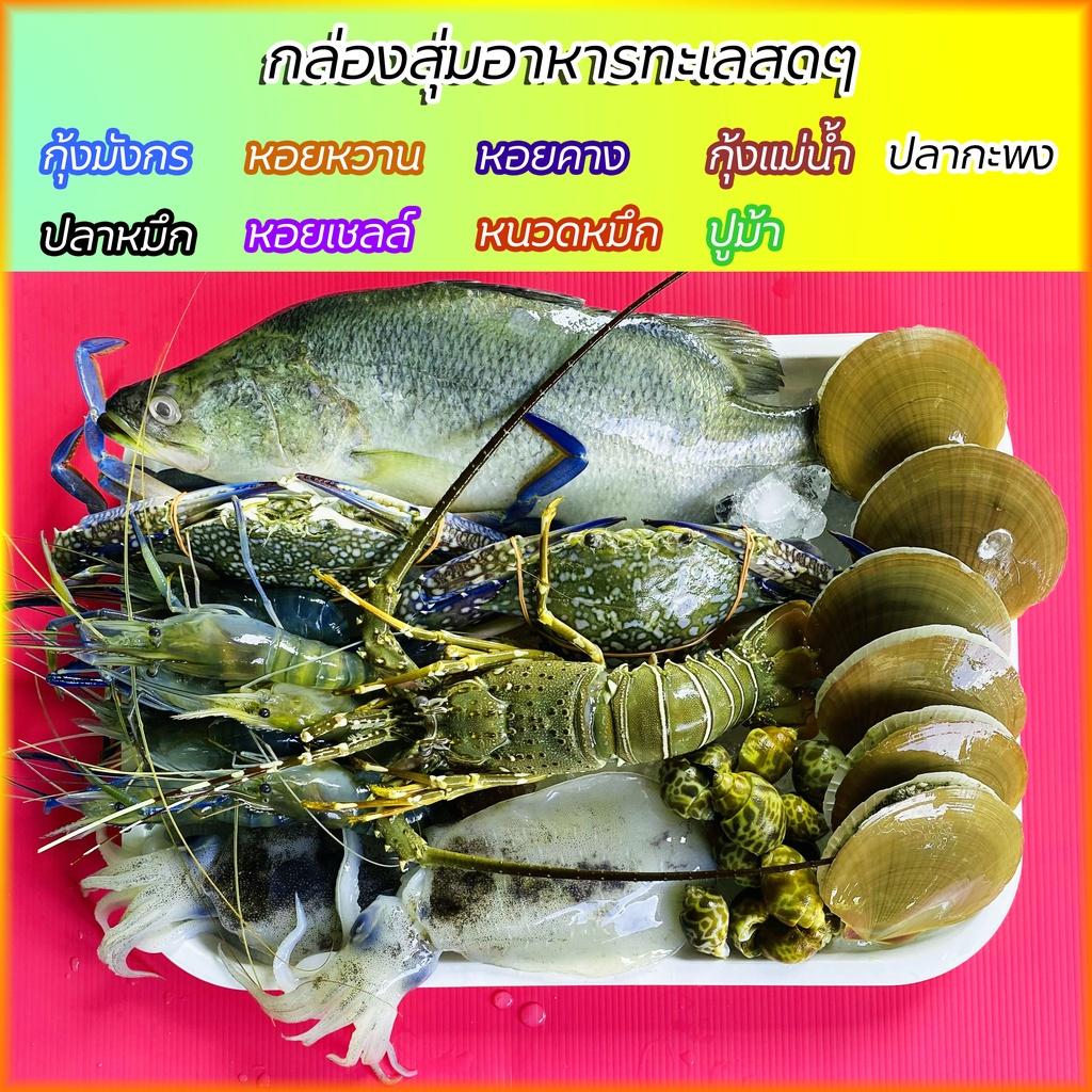 กล่องสุ่มอาหารทะเลคัดเกรด สดๆ แน่นๆ ไซส์ (M)