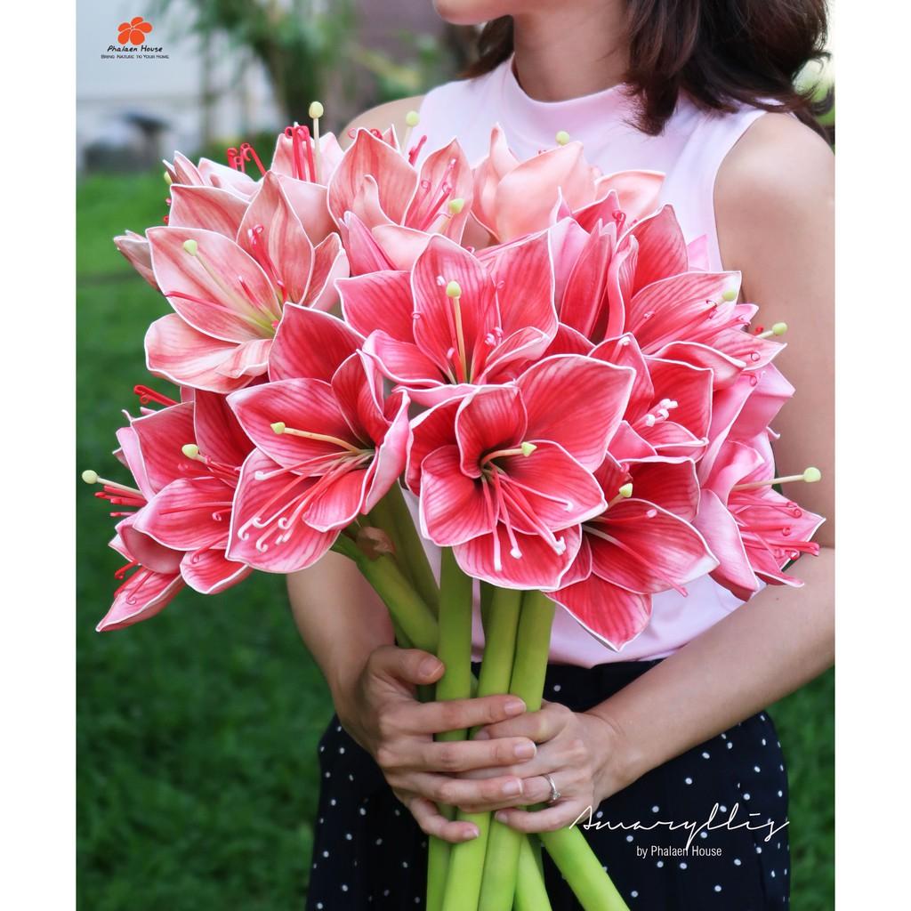 Phalaen House : ดอกว่านสี่ทิศประดิษฐ์(Amaryllis) ว่านสี่ทิศแดง ดอกไม้ประดิษฐ์ ว่าน 4 ทิศ ไม้มงคล สีสันสดใส เหมือนจริง