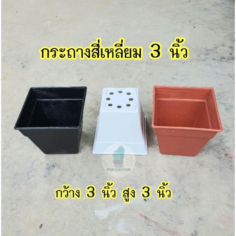 กระถางสี่เหลี่ยม 3 นิ้ว สำหรับปลูกกระบองเพชร,ละไม้อวบน้ำ