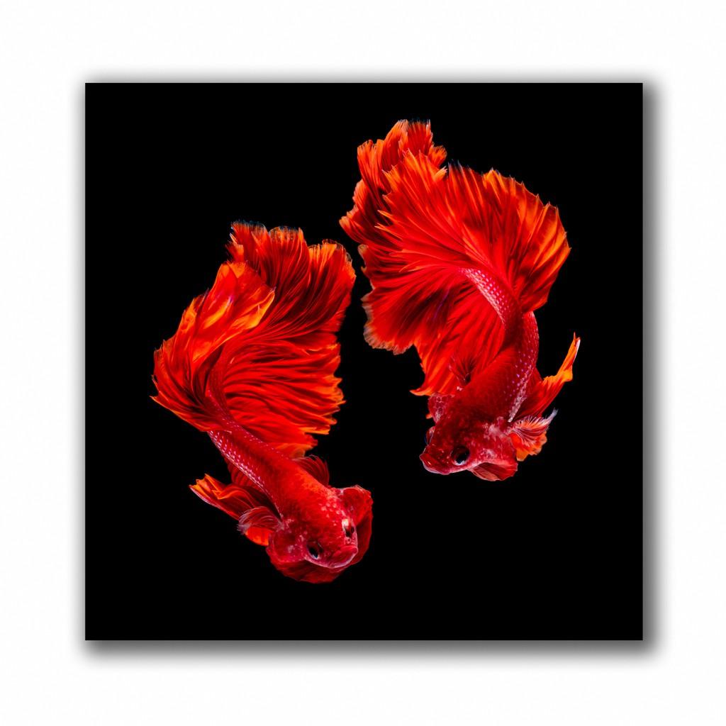 กรอบรูป กรอบลอย รูปภาพมงคล ภาพแต่งบ้าน กรอบรูปติดผนัง รูปภาพดอกไม้ รูปภาพปลากัดสวยๆ จำนวน 1 ชิ้น